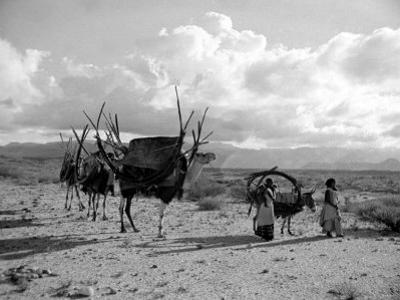 Local Women of Somaliland with Their Camels, 1935