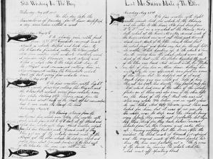Log Book Pages from Whaling Ship