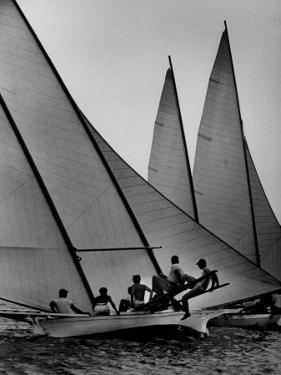 Log Canoe Sailboats Racing on the Chesapeake Bay