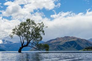 A lonely tree is silhouetted in a lake in the mountains, Wanaka, Otago, South Island, New Zealand by Logan Brown