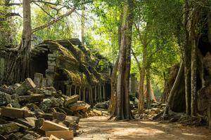 Ancient ruins of Ta Prohm, Angkor Nat'l Park, UNESCO World Heritage, Siem Reap, Cambodia by Logan Brown