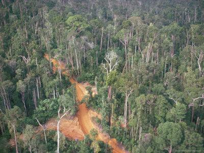 https://imgc.allpostersimages.com/img/posters/logging-road-through-rainforest-brazil-south-america_u-L-P1JY4T0.jpg?p=0