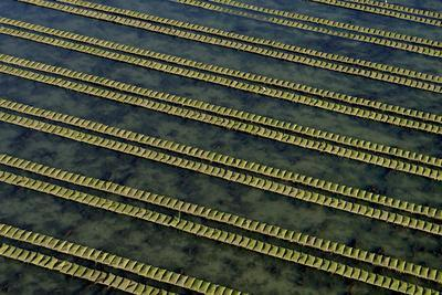 Rows of racks used in oyster farming at high tide, Ile de Re, Charente-Maritime, France, July 2017.