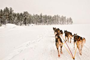 Dog Sledding Across Frozen Lakes in Jokkmokk, Swedish Lapland by Lola Akinmade Akerstrom