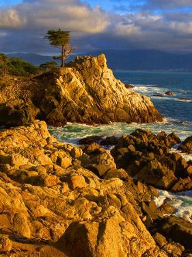 Lone cypress on the coast, Pebble Beach, Monterey County, California, USA