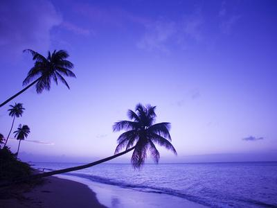 https://imgc.allpostersimages.com/img/posters/lone-palm-trees-at-sunset-coconut-grove-beach-at-cade-s-bay-nevis-caribbean_u-L-P245JY0.jpg?p=0