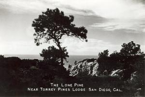 Lone Pine, Torrey Pines State Park
