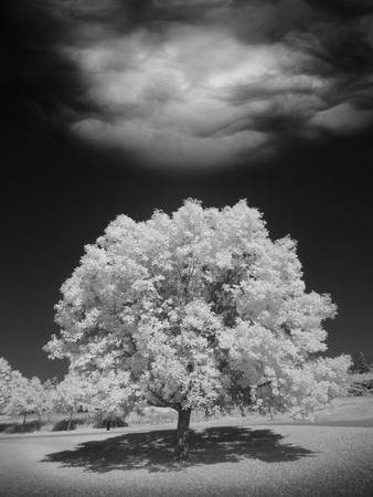 https://imgc.allpostersimages.com/img/posters/lone-tree-cloud-green-bay-wisconsin-12_u-L-Q1AHRCV0.jpg?p=0