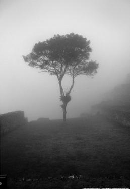 Lone Tree Macchu Picchu Peru