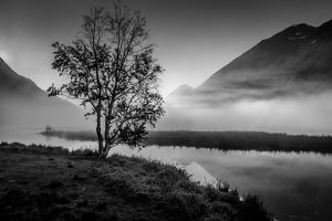 Lone tree with morning fog seen on Tern Lake, Kenai Penninsula, Alaska