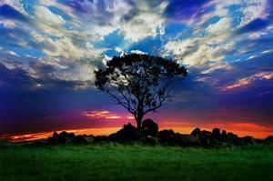Lonely Tree and Sunset