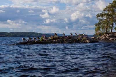 https://imgc.allpostersimages.com/img/posters/lonesome-landscape-on-stora-le-lake-sweden_u-L-Q1EXTXS0.jpg?artPerspective=n