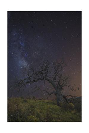 https://imgc.allpostersimages.com/img/posters/lonesome-tree_u-L-Q1CAT880.jpg?artPerspective=n