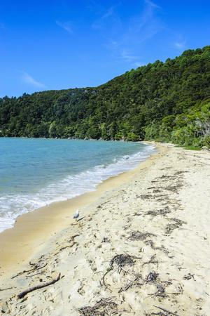 https://imgc.allpostersimages.com/img/posters/long-sandy-beach-abel-tasman-national-park-south-island-new-zealand-pacific_u-L-PQ8SSN0.jpg?p=0