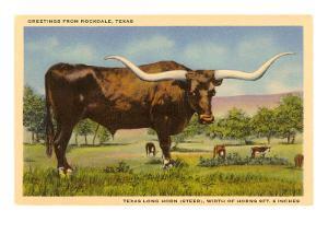 Longhorn Steer, Rockdale, Texas