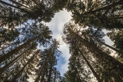 https://imgc.allpostersimages.com/img/posters/looking-up-in-the-forest-clearing_u-L-Q1CAT6P0.jpg?artPerspective=n