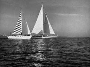 Overtaking a Conventional Sailboat, the Catamaran Is Displaying its Speed by Loomis Dean