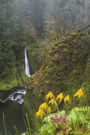 https://imgc.allpostersimages.com/img/posters/loowit-falls-in-forest-scenery-columbia-gorge-oregon-usa_u-L-PN6MSJ0.jpg?p=0