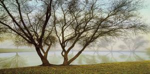Silhouetts In Fog by Loren Soderberg