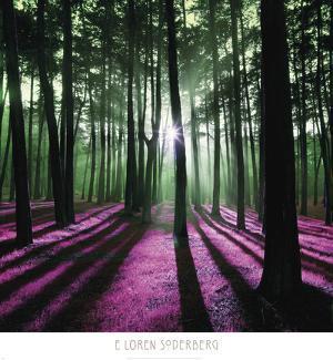 Technicolor Trees 1 by Loren Soderberg