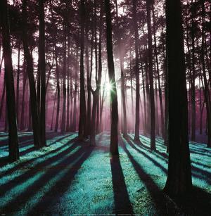 Technicolor Trees 3 by Loren Soderberg