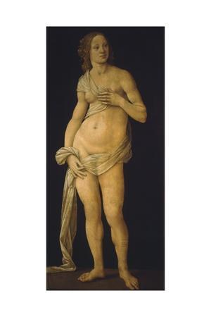Venus, 1493-93