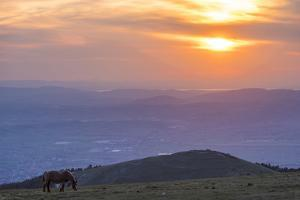 Horse in the fields, Mount Subasio, Umbria, Italy, Europe by Lorenzo Mattei