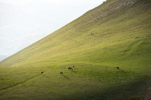 Horses in the fields at sunset, Monte Cucco Park, Apennines, Umbria, Italy, Europe by Lorenzo Mattei
