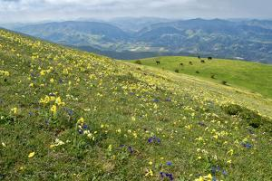 Wild flowers in bloom and horses, Mountain Acuto, Apennines, Umbria, Italy, Europe by Lorenzo Mattei