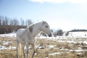White Horse in Prairie Field in Early Spring by Lori Andrews