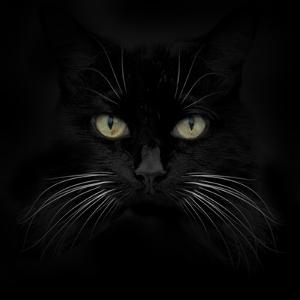 Black Cat by Lori Hutchison