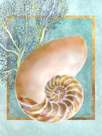 Nautilus Shell and Coral