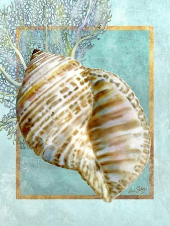Turban Shell and Coral