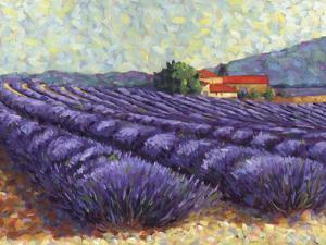 Lavender Fields II by Lorraine Westwood