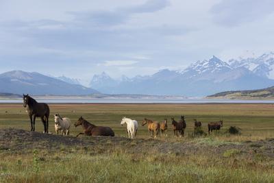 https://imgc.allpostersimages.com/img/posters/los-glaciares-national-park-patagonia-argentina_u-L-PWFKS70.jpg?p=0