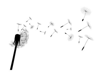 Blow Dandelion by losw