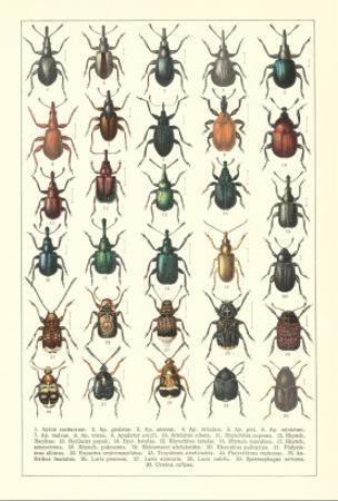 Lots of Beetles