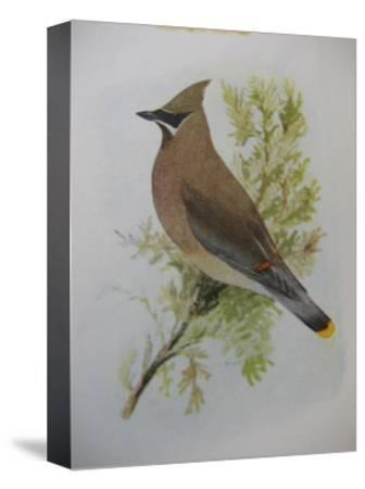 A Painting of a Cedar Waxwing Perched on a Tree Branch