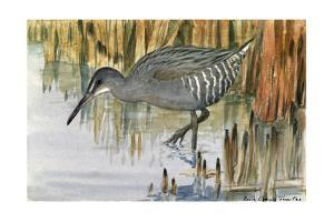 A Painting of a Clapper Rail Bird in the Marsh by Louis Agassi Fuertes