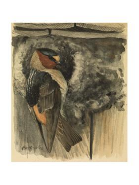 A Painting of a Cliff, or Eaves Swallow Clinging to a Nest by Louis Agassi Fuertes