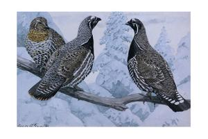 A Painting of a Pair of Spruce Grouse and a Franklin's Grouse by Louis Agassi Fuertes