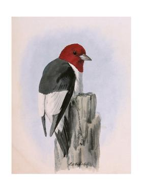 A Painting of a Red-Headed Woodpecker Perched on a Tree Stump by Louis Agassi Fuertes
