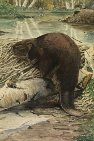 A Painting of an American Beaver Sitting on a Freshly Gnawed Log by Louis Agassi Fuertes