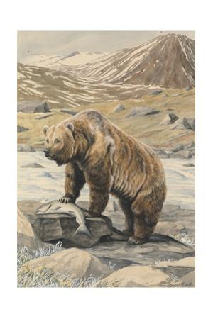 An Alaskan Brown Bear with a Salmon it Caught in a Nearby River by Louis Agassi Fuertes
