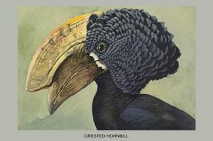 Crested Hornbill by Louis Agassiz Fuertes