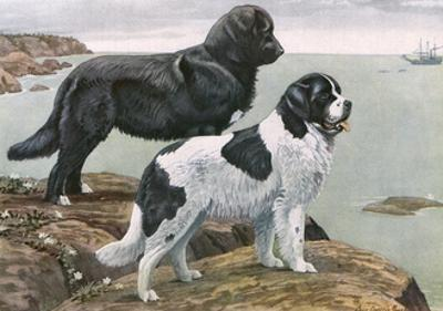 Newfoundlands by Water