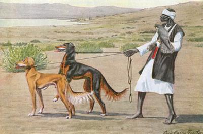 Salukis, Man and Facon