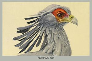 Secretary Bird by Louis Agassiz Fuertes