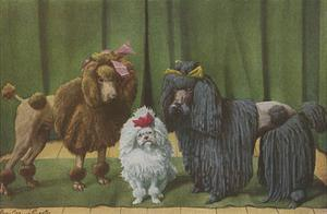 Three Poodle Specimens by Louis Agassiz Fuertes
