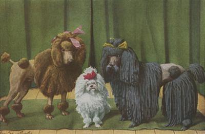 Three Poodle Specimens